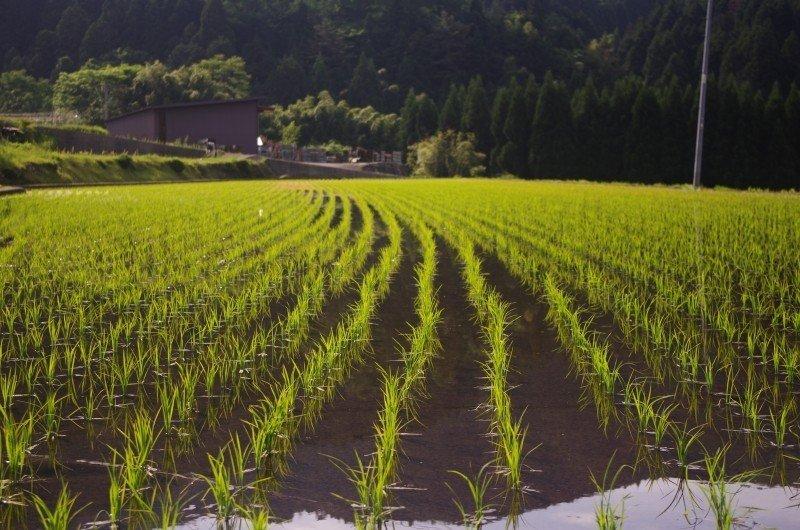 mesa-habla-cocina-japonesa-arrozal
