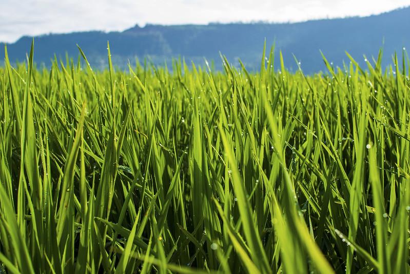 mesa-habla-campos-arroz