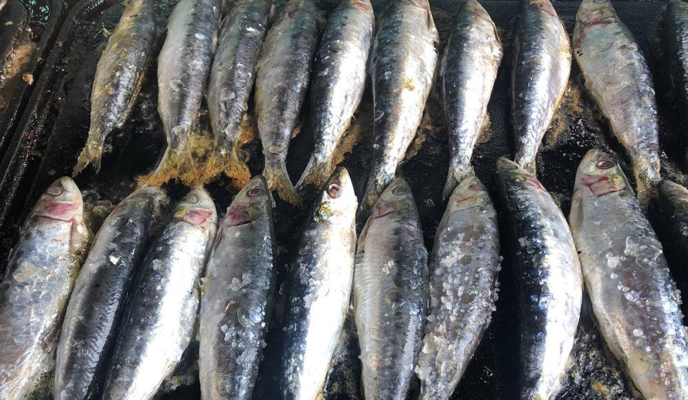 mesa-habla-festival-sardina-candas