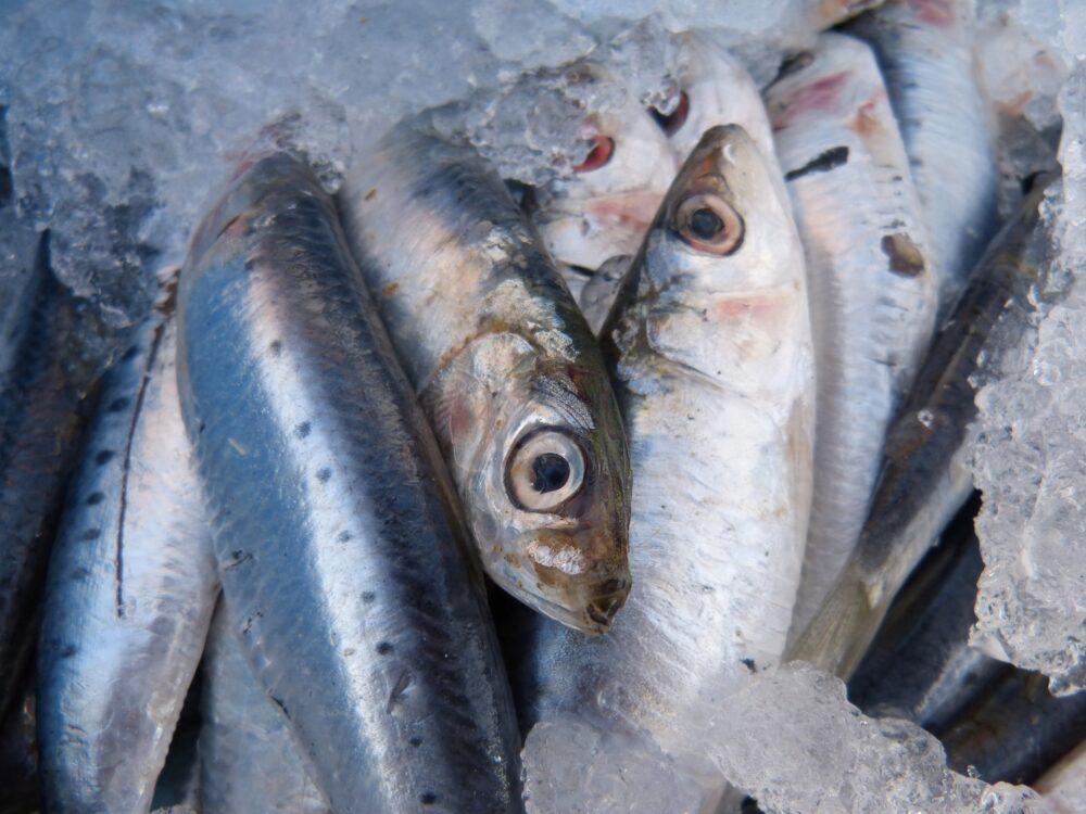 mesa-habla-sardinas