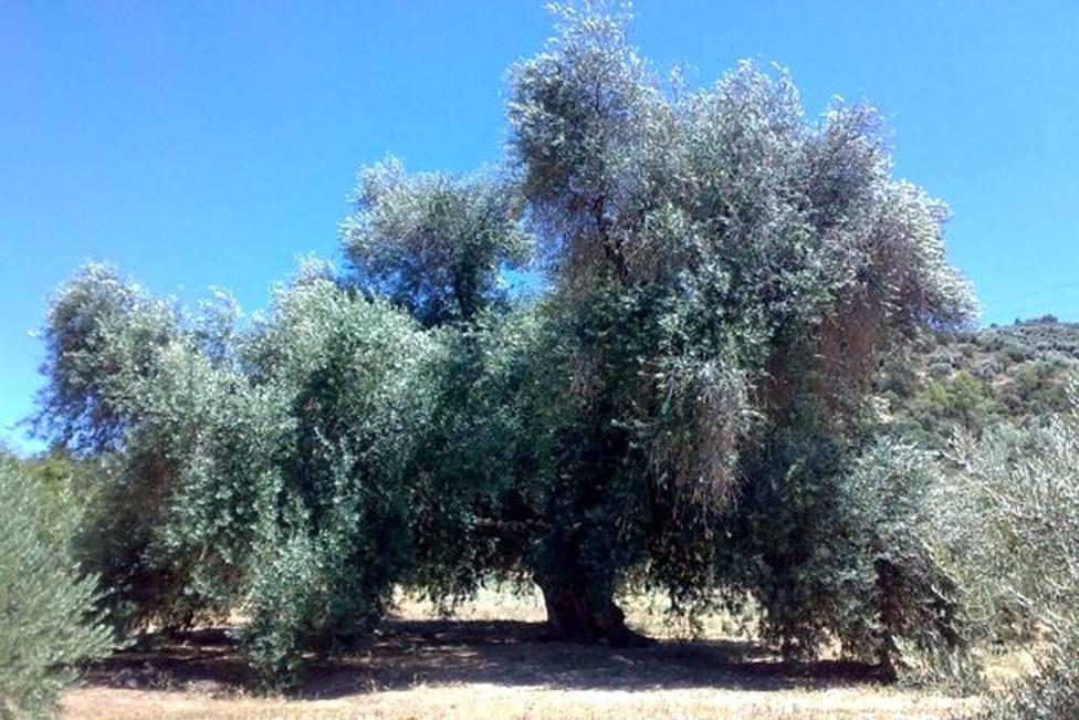 mesa-habla-olivo-fuentebuena-jaen