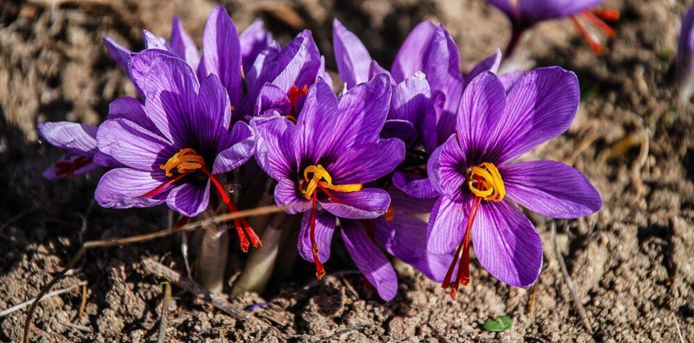 mesa-habla-flores-azafran