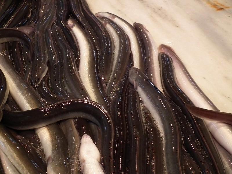 mesa-habla-jornadas-angula-grupo-oter-anguilas