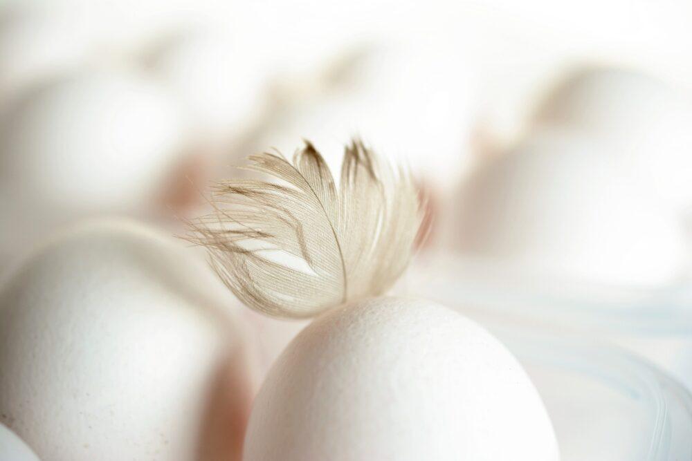 mesa-habla-huevos 7