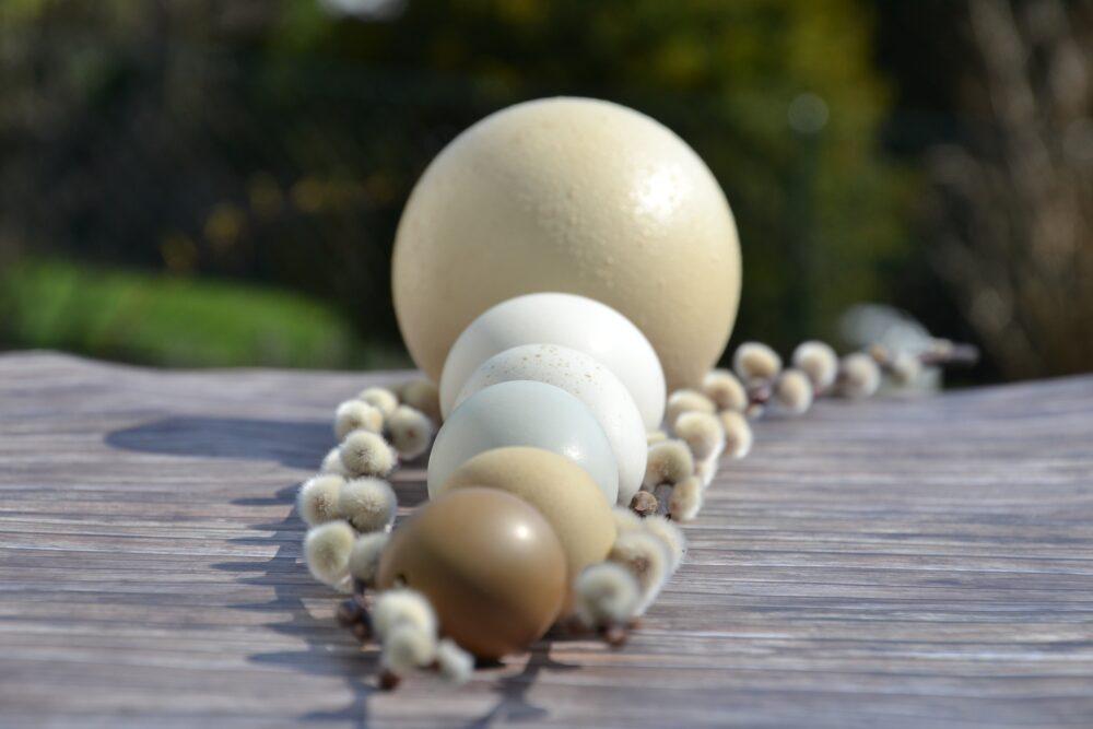 mesa-habla-huevos-avestruz