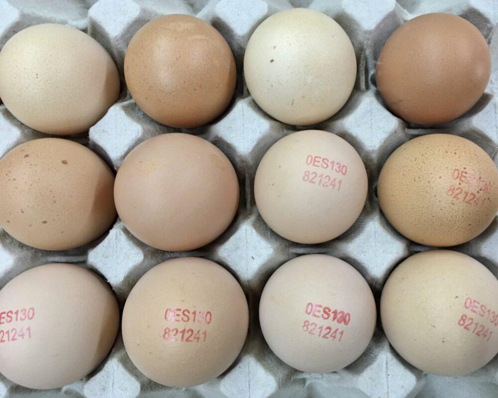 mesa-habla-huevos-ecologicos-barja 25