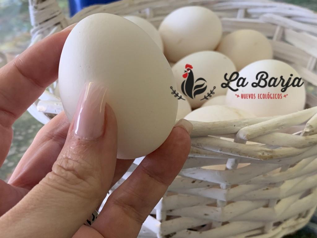 mesa-habla-huevos-ecologicos-barja-portada