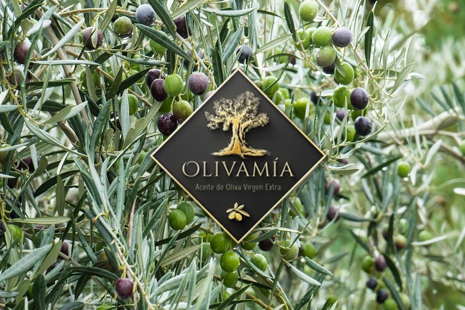 mesa-habla-olivamia-portada